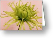 Lime Photo Greeting Cards - Curly Mum Greeting Card by Marsha Heiken