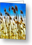 Sea Oats Greeting Cards - Currituck Oats Blue AP Greeting Card by Dan Carmichael