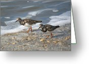 Sandpiper Greeting Cards - Cute Couple Greeting Card by Kenneth Albin