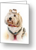 Scarf Greeting Cards - Cute dog in Halloween cowboy costume Greeting Card by Elena Elisseeva