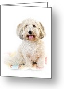 Rug Greeting Cards - Cute dog portrait Greeting Card by Elena Elisseeva