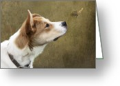 Sniff Greeting Cards - Cute Dog with Butterfly Greeting Card by Ethiriel  Photography