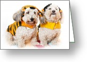 Costumes Greeting Cards - Cute dogs in Halloween costumes Greeting Card by Elena Elisseeva