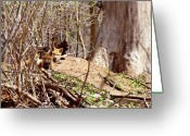 Vulpes Greeting Cards - Cute Kit Foxes Greeting Card by Thomas Young