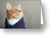 Scarf Greeting Cards - Cute Red Cat With Purple Scarf Greeting Card by Paula Danilse