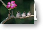 Pink Flower Greeting Cards - Cute Small Birds Greeting Card by Photowork by Sijanto