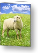 Rural Greeting Cards - Cute young sheep Greeting Card by Elena Elisseeva