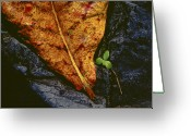Brown Leaf Greeting Cards - Cycle of Life Greeting Card by Paul Wear
