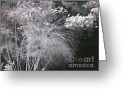 Herb Greeting Cards - Cyperus papyrus Greeting Card by Christine Till