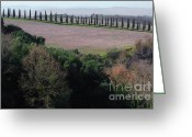 Tree Allee Greeting Cards - Cypress allee Greeting Card by Mats Silvan