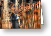 Fall Photographs Greeting Cards - Cypress Autumn Reflection Greeting Card by Ester  Rogers
