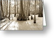 Duotone Greeting Cards - Cypress Evening Greeting Card by Scott Pellegrin