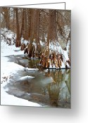 Winter Trees Greeting Cards - Cypress in Lake Murray Greeting Card by Iris Greenwell