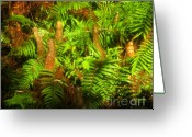 Cypress Knees Greeting Cards - Cypress knees in ferns Greeting Card by David Lee Thompson