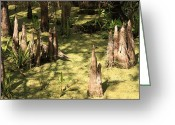 Florida Swamp Greeting Cards - Cypress Knees in Green Swamp Greeting Card by Carol Groenen
