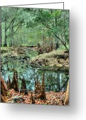 Cypress Knees Greeting Cards - Cypress Knees Greeting Card by Kristin Elmquist