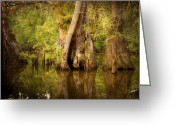 Cypress Tree Greeting Cards - Cypress  Greeting Card by Scott Pellegrin