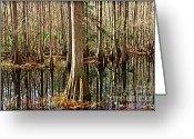 Florida Swamp Greeting Cards - Cypress Swamp Greeting Card by Carol Groenen