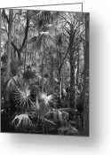 Florida Swamp Greeting Cards - Cypress Swamp Florida Greeting Card by Joseph G Holland