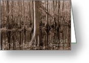 Florida Swamp Greeting Cards - Cypress Swamp Reflection in Sepia Greeting Card by Carol Groenen