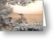 Cypress Tree Greeting Cards - Cypress Tree Greeting Card by Jane Linders