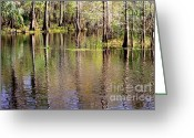 Florida Swamp Greeting Cards - Cypress Trees along the Hillsborough River Greeting Card by Carol Groenen