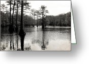 Crocks Photo Greeting Cards - Cypress Trees in Louisiana Greeting Card by Ester  Rogers