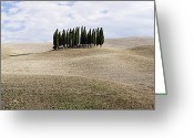 Clump Greeting Cards - Cypress Trees Greeting Card by Jeremy Woodhouse