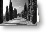 Dirt Road Greeting Cards - Cypress Trees Greeting Card by Joana Kruse