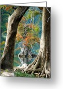 Cypress Tree Greeting Cards - Cypress Window Greeting Card by Robert Anschutz