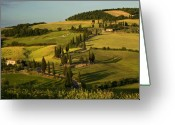 Wheatfields Photo Greeting Cards - Cypresses on hillside Tuscany Italy Greeting Card by Abhi Ganju