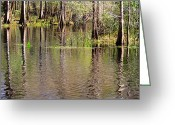 Florida Swamp Greeting Cards - Cypresses Reflection Greeting Card by Carol Groenen