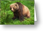 Grizzly Bears Greeting Cards - Da Bear Greeting Card by David  Naman