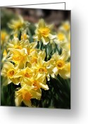 Bouquets Greeting Cards - Daffodil Greeting Card by Bill  Wakeley