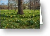 Arboretum Greeting Cards - Daffodil Glade Number 2 Greeting Card by Steve Gadomski