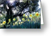 Tree Prints Greeting Cards - Daffodils and the Oak Greeting Card by Kathy Yates