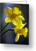 English Countryside Print Greeting Cards - Daffodils Greeting Card by Darren Burroughs