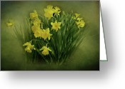 Indiana Flowers Greeting Cards - Daffodils Greeting Card by Sandy Keeton