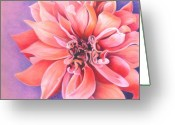 Bloosom Drawings Greeting Cards - Dahlia 2 Greeting Card by Phyllis Howard