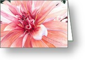 Barbara Painting Greeting Cards - Dahlia Dazzler Greeting Card by Barbara Jewell