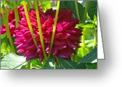 Unique Gifts Greeting Cards - Dahlia Flower Retro art Prints Unique Red Dahlias Flowers Greeting Card by Baslee Troutman Floral Art Prints