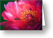Dahlia Greeting Cards - Dahlia Greeting Card by Jurek Zamoyski