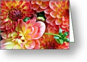 Pdx Greeting Cards - Dahlias Greeting Card by Cathie Tyler