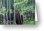 Sold Greeting Cards - Daintree forest at Twilight Greeting Card by Tatjana Popovska