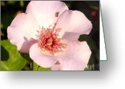 Bess Greeting Cards - Dainty Bess Rose and Bug Greeting Card by Rod Ismay
