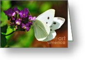 Flower Stamen Greeting Cards - Dainty Butterfly Greeting Card by Kaye Menner