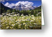 Mountain Summit Greeting Cards - Daisies at Mount Robson Greeting Card by Elena Elisseeva