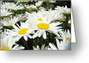 White Daisies Greeting Cards - Daisies Floral Landscape art prints Daisy Flowers Baslee Troutman Greeting Card by Baslee Troutman Fine Art Photography