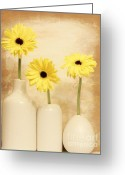 Dk Brown Greeting Cards - Daisies In A Row Greeting Card by Marsha Heiken
