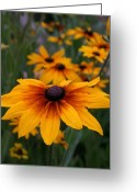 Kkphoto1 Greeting Cards - Daisies In The Field Greeting Card by Kay Novy